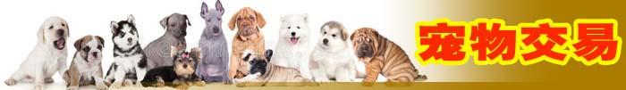 宠物交易买卖狗