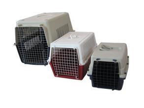 让松狮习惯住航空箱 笼内训练松狮幼犬早期训练
