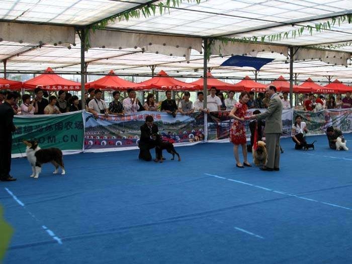 09.5.10日第三届苏州国际名犬展战神获全场总冠军BIS松狮犬冠军
