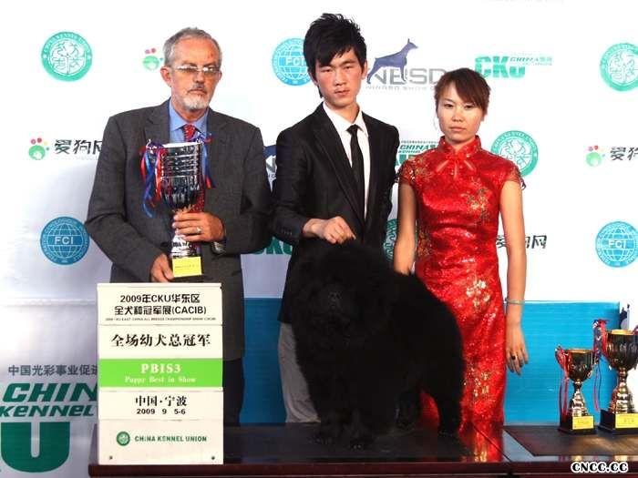2009年9月5-6日FCI华东区全犬种国际冠军展CACIB黑牛获得全场总冠军BIS3松狮冠军BOB